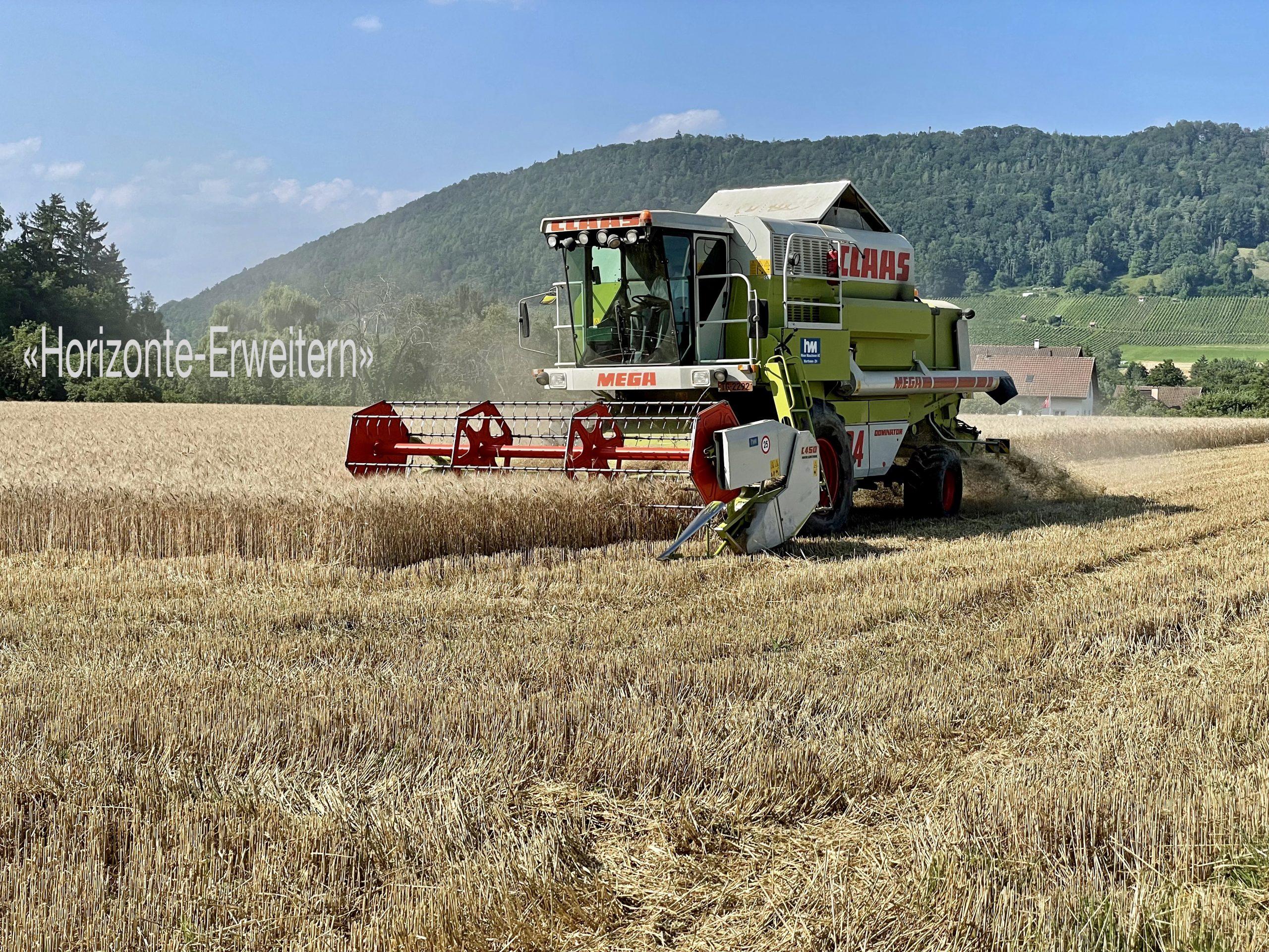 Grüner Mähdrescher von Claas bei der Weizenernte