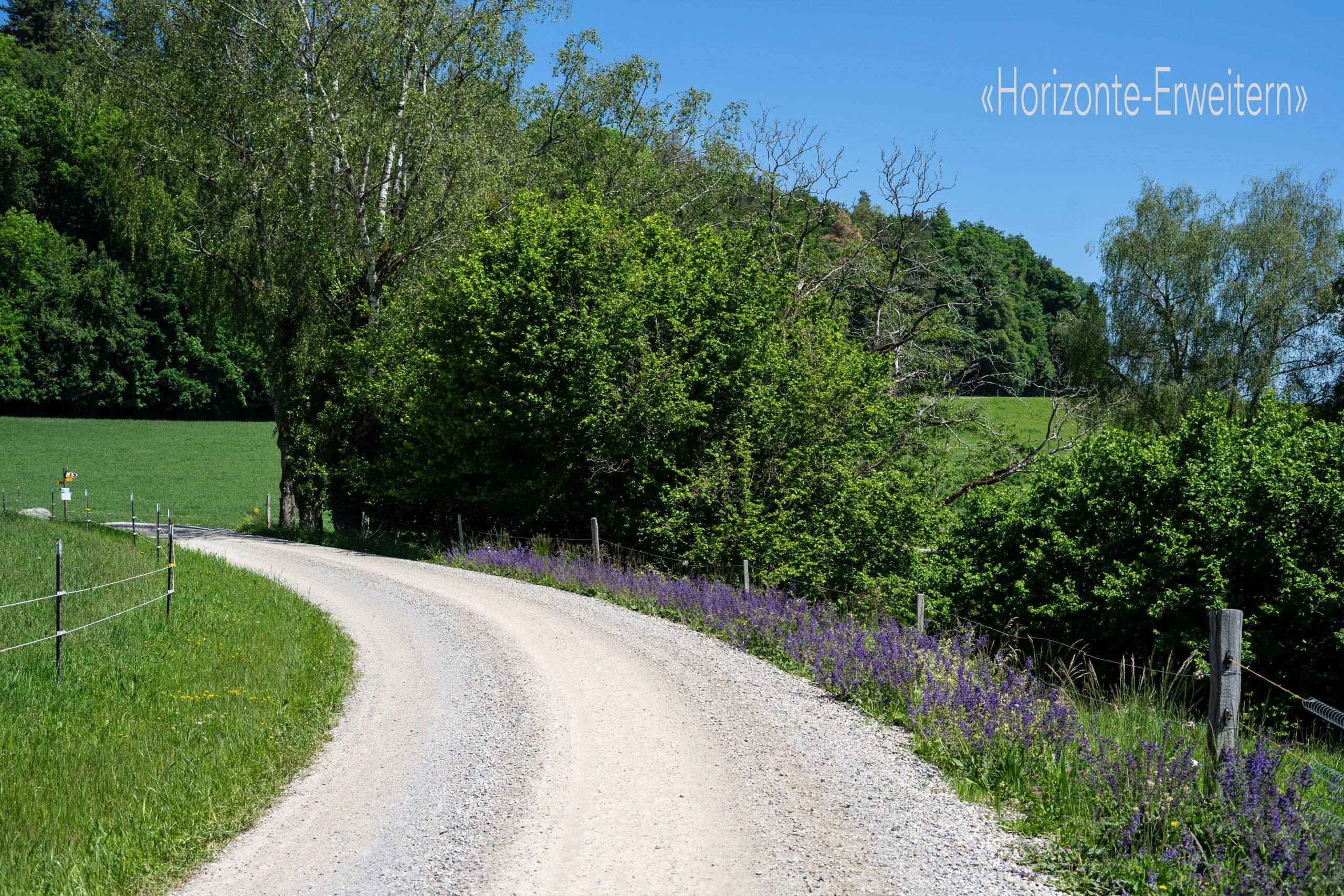 Wanderweg auf der Schweizer Seite des Schienerbergs